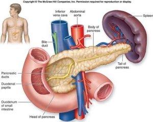 Obat Diabetes Melitus Tradisional